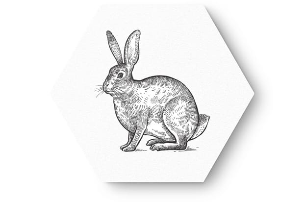 getekende dieren3
