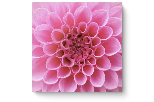 bloemen3